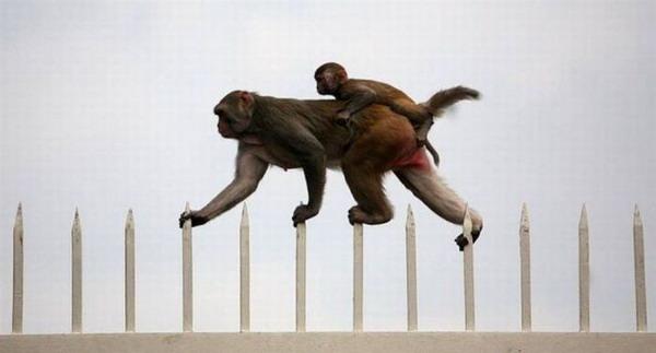 Monkey Skill
