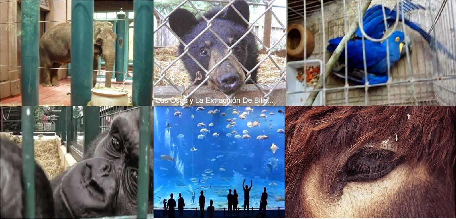 Pelo Fim dos Zoológicos no Mundo