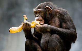 загадки про год обезьяны