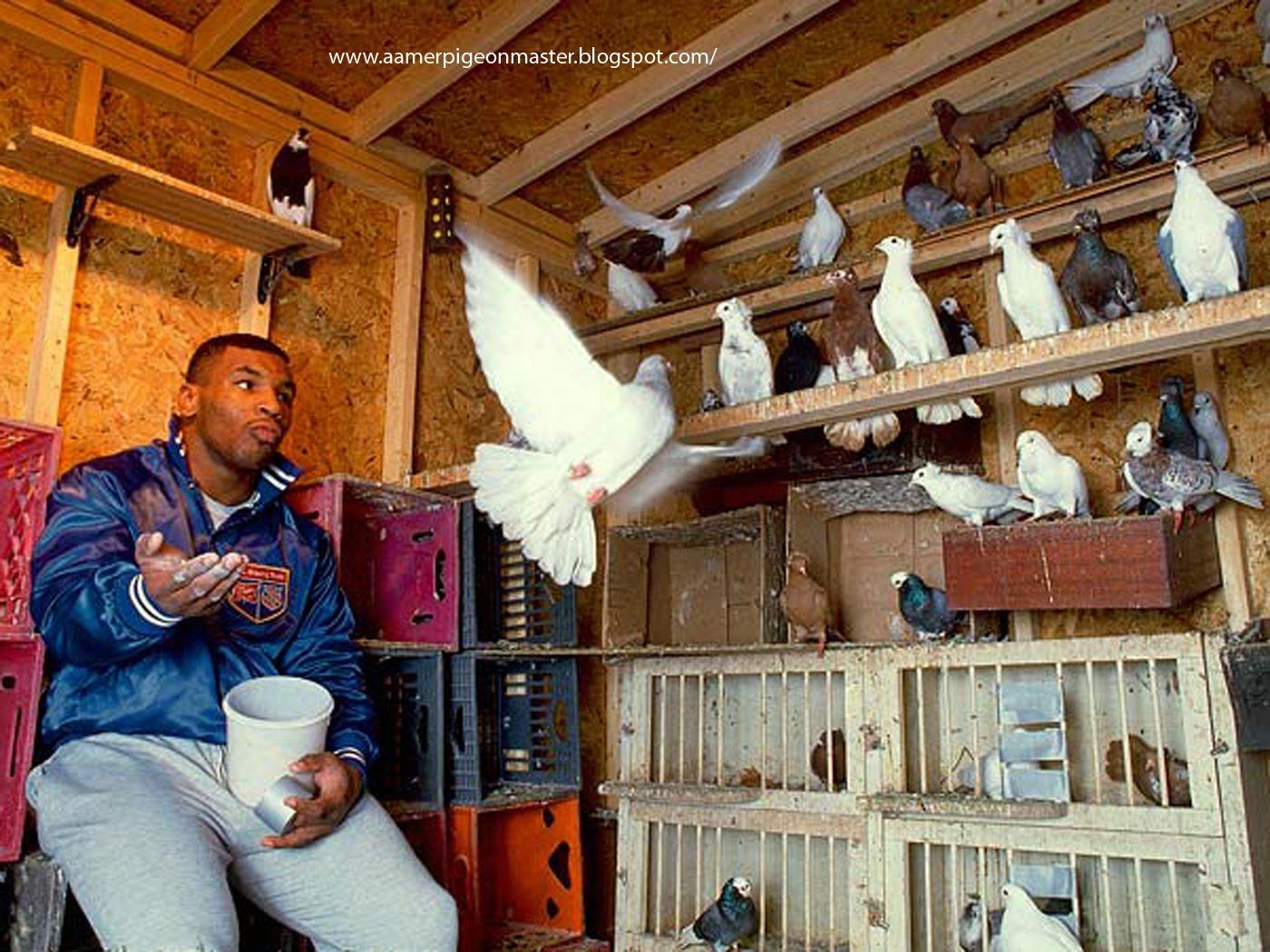 http://2.bp.blogspot.com/-VR8E6QTGnbc/TbVjBQ-VIVI/AAAAAAAAAG4/ALsk95QoG-Y/s1600/mike-tyson-pigeons.jpg