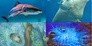 contoh hewan bertelur, gambar ikan, hewan mamalia