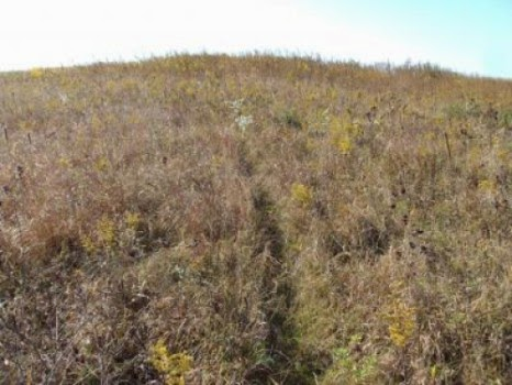 This is the sampling site located at the A.C. and Lela Morris Prairie Reserve, located in Jasper County Iowa. (Credit: Jim Tiedje) Click to enlarge.
