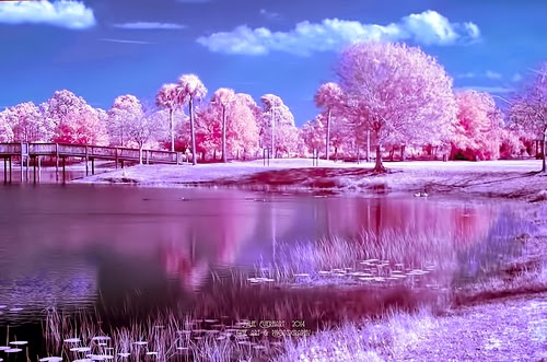 Winter Pinks 2 by Julie Everhart