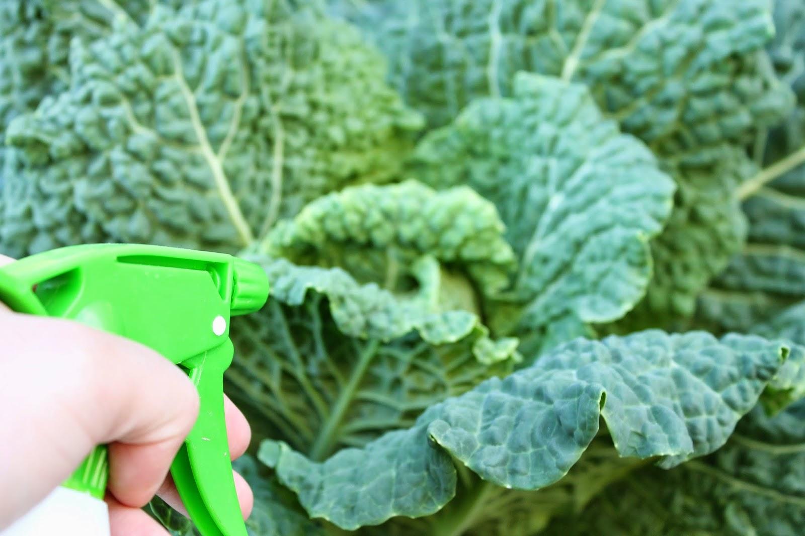 how to make garlic spray for the garden