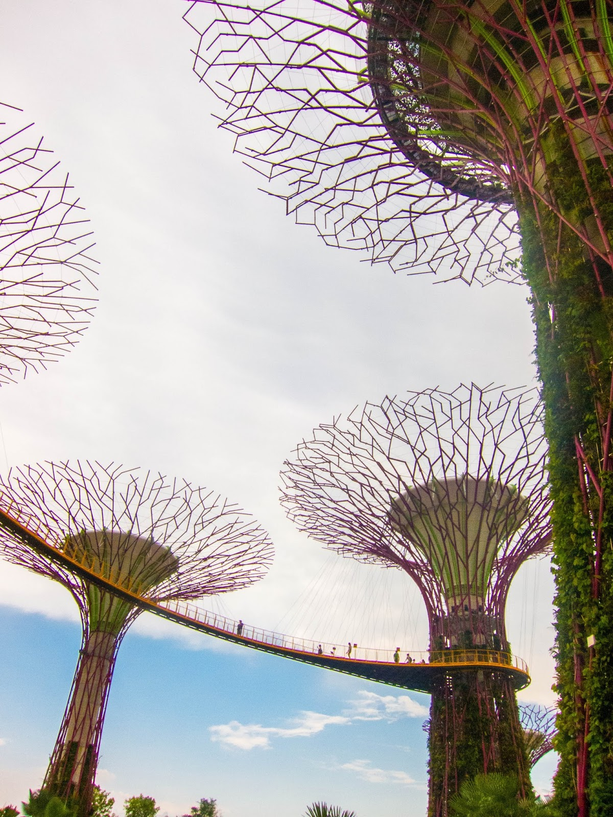 OCBC Skyway at Supertree Grove, Gardens by the Bay in Singapore | Svelte Salivations - Travel