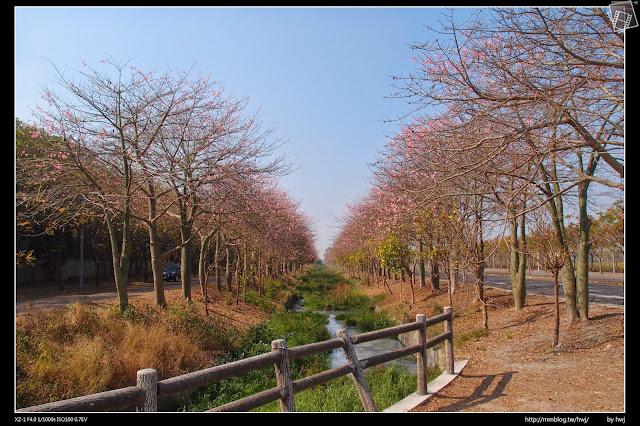 2015-01-11雲林虎尾-農博生態園區-美人花大道