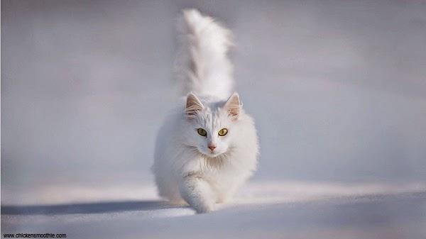 Une Photo Chat blanc mignon dans la neige