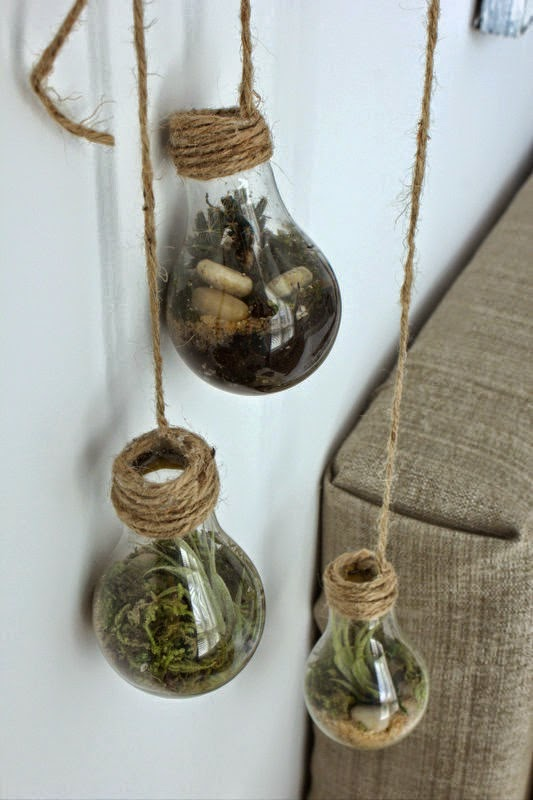 repurposed upcycled terrariums air plants