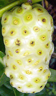 Oil extracted from Noni fruit to treat abdominal pain