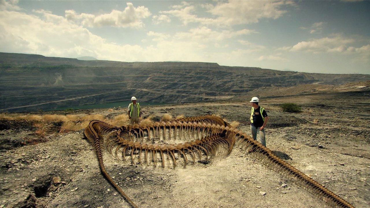 Paleontología en Colombia: Titanoboa cerrejonensis, la serpiente más ...