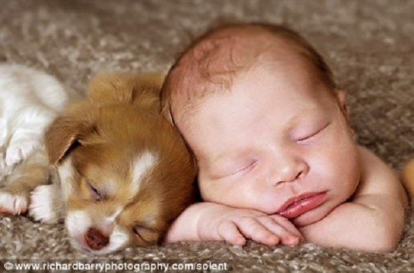 Photo Bébé avec Chien qui dorent