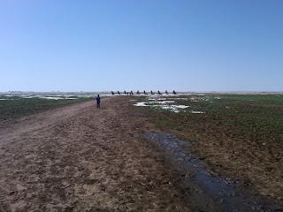 Cadillac Ranch - Amarillo, Texas