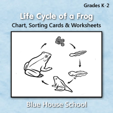 Blue House School - Life Cycle of a Frog - Chart, Sorting Cards & Worksheets