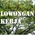 Tukang Kayu Borongan - Jogja