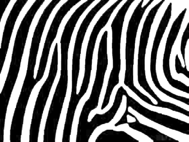 zebra print comforterLarge