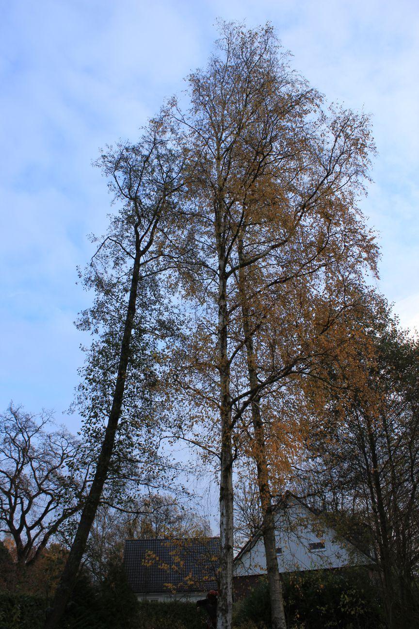Unser Weg zum Haus in Hoisdorf: 2012