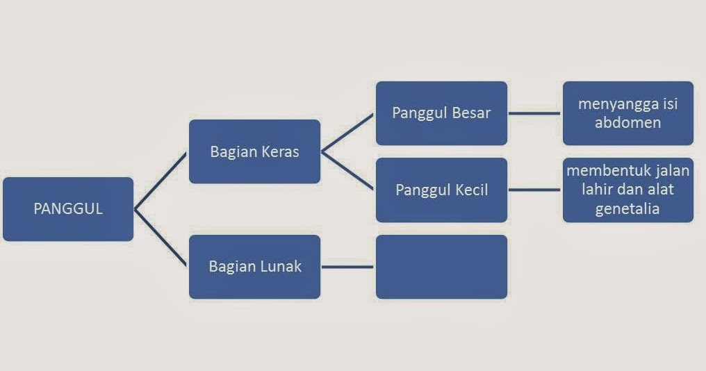 Welcome Blog Indah Fedri: ANATOMI DAN FISOLOGI ORGAN ...