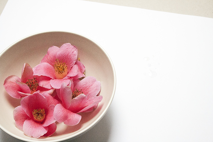 pink flowers in a bowl