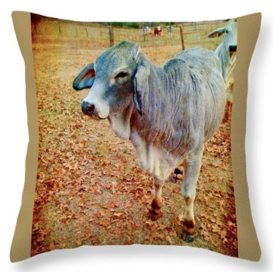 My Photography on Pillows