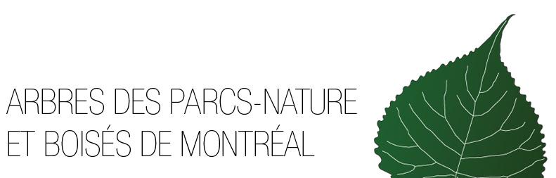 Arbres des parcs-nature et boisés de Montréal