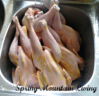 stewing hens spring mountain living