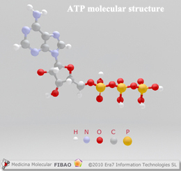 ATP molecular structure