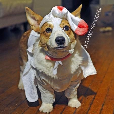 Cosplay dog funny animal