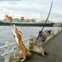 Foto Lucu Kucing Memancing Ikan
