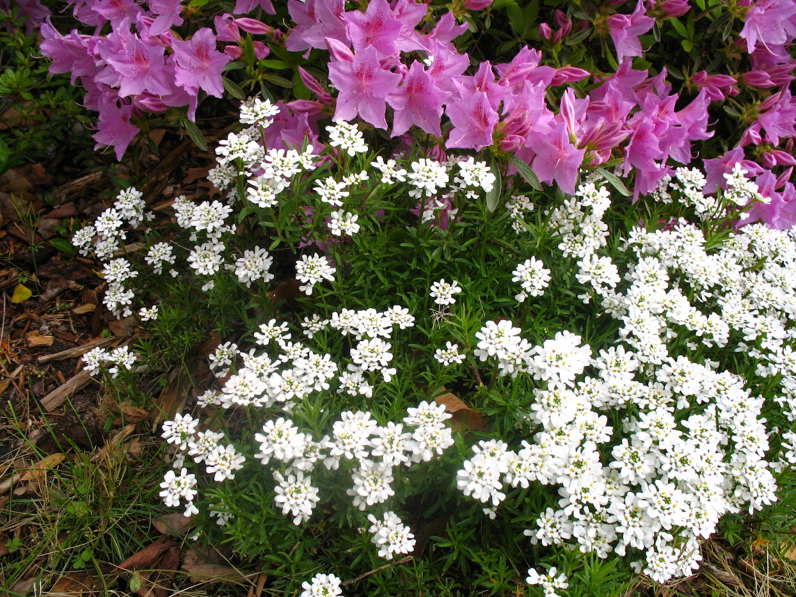 Views from the garden easy care white flowers for home for Easy to take care of outdoor plants