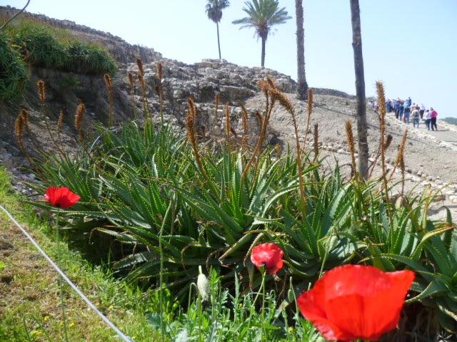 Ascent into Megiddo