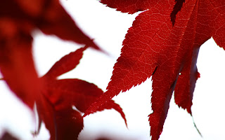 High Definition Leaves Wallpapers