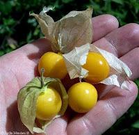 buah khas Indonesia, buah langka Indonesia