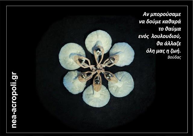 Αν μπορούσαμε να δούμε καθαρά το θαύμα ενός λουλουδιού θα άλλαζε όλη μας η ζωή. ΒΟΥΔΑΣ - ΝΕΑ ΑΚΡΟΠΟΛΗ - ΡΗΤΑ