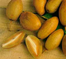 Sapodilla fruit
