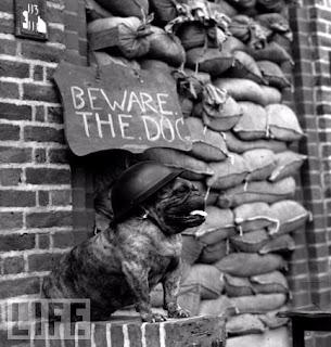 Perros en la guerra
