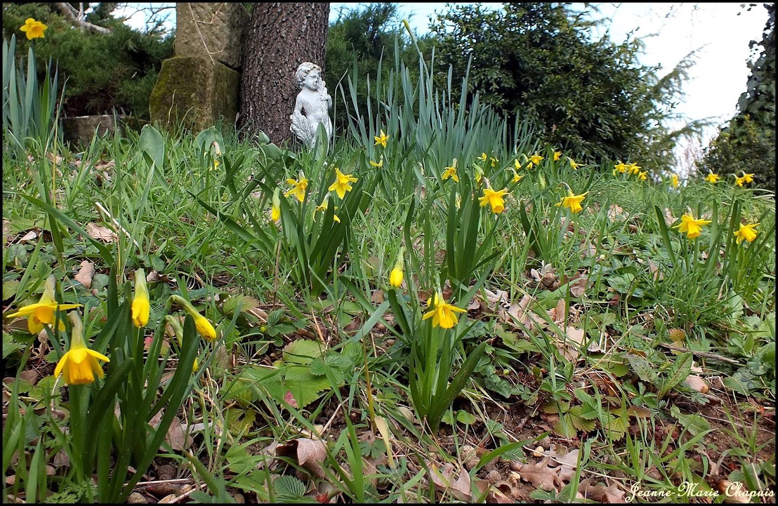 Le jardin du bois joli et bis repetitas rosiers anciens - Le petit jardin covent garden metz ...