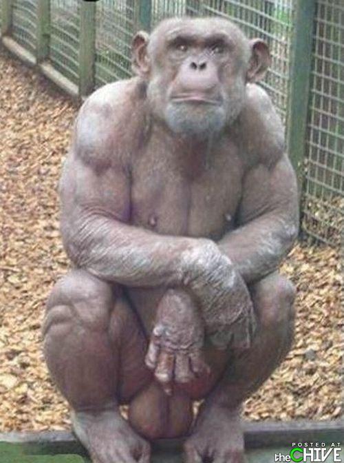 Monkey blowjob