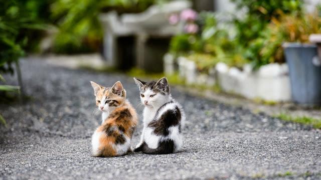 Fotos de dos Hermosos Gatitos
