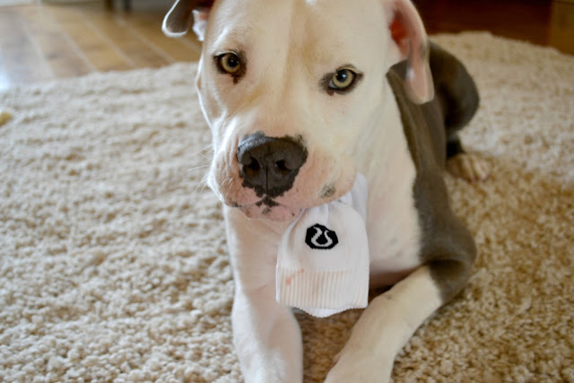 Mommy Testers dog eating socks