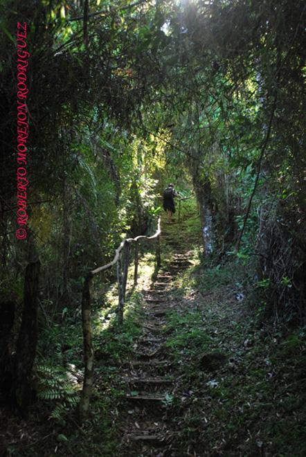 Un hombre transita por sendero hacia el Pico Turquino en la Sierra Maestra entre las provincias Granma y Santiago de Cuba.