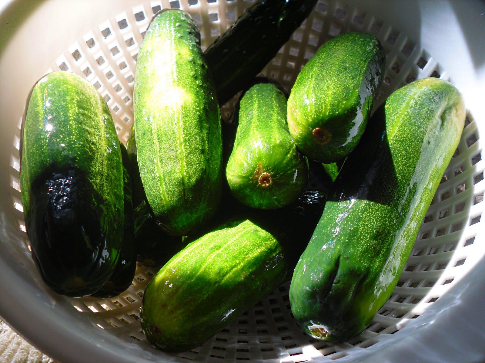 Comfy Cuisine: Quick Garlic Dill Pickles