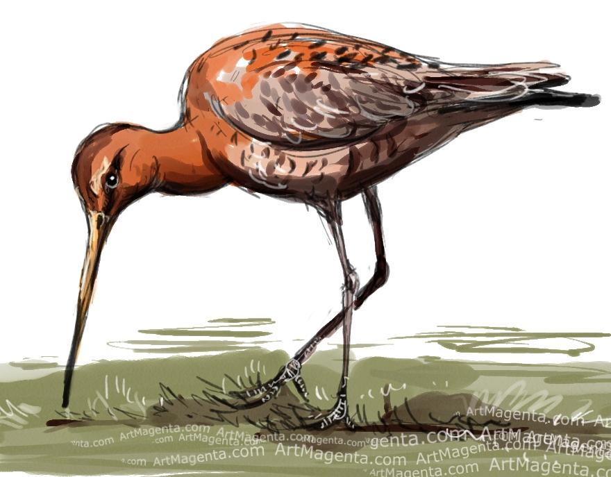 En fågelmålning av en rödspov från Artmagentas svenska galleri om fåglar