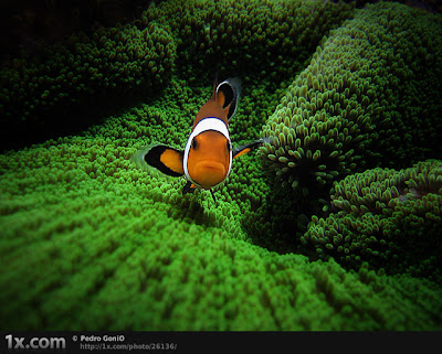 Gambar pemandangan bawah laut ikan gabus di terumbu karang.