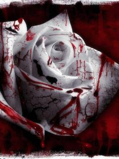 Blood Rose Wallpapers White