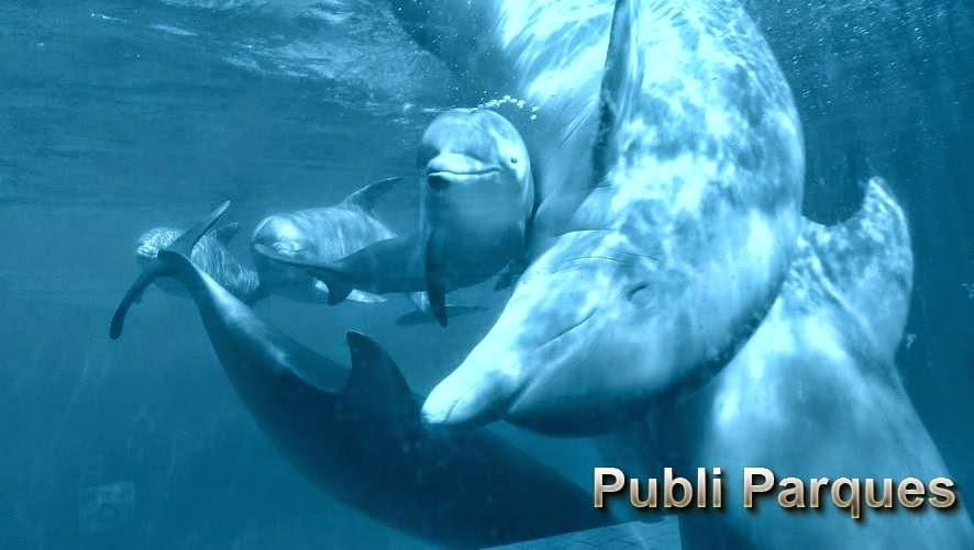 Cría de delfín en Zoo Aquarium Madrid