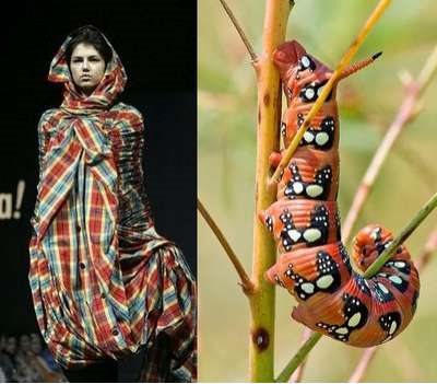 WEIRD NEWS: Fashion inspired by animals and insects