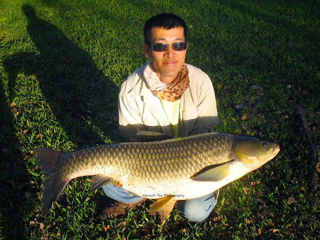 Actinopterygii_Cypriniformes_Cyprinidae_