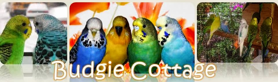 Budgie Cottage