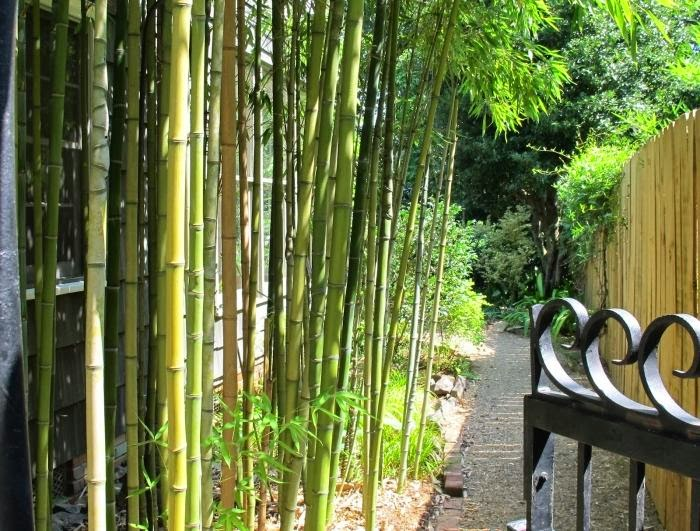 Unique bamboo plants for your garden