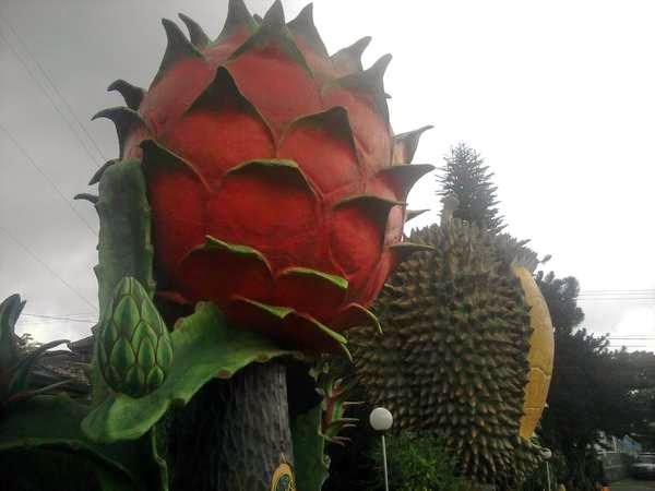 Tempat Wisata Pilihan Warso Farm Bogor
